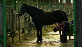 SAFER AT HOME ORDER AFFECTING EQUINE BOARDING STABLES AND BOARDERS